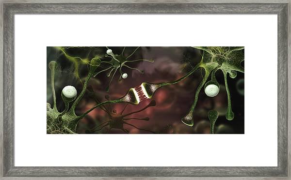 Microscopic Image Of Brain Neurons Framed Print