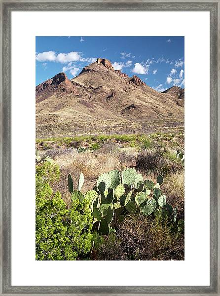Mid-altitude Desert Framed Print by Bob Gibbons/science Photo Library