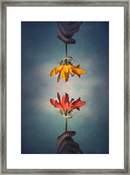 Middle Ground Framed Print