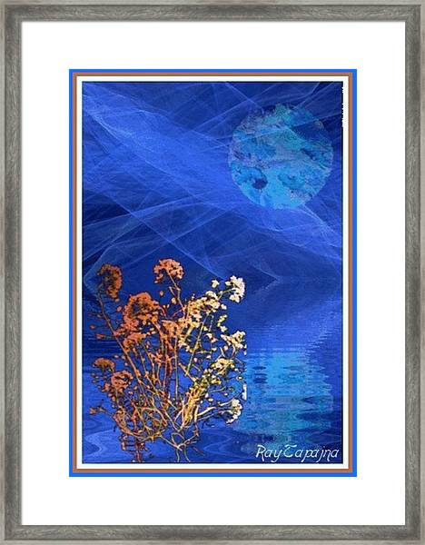 Midnight Flowers Framed Print by Ray Tapajna
