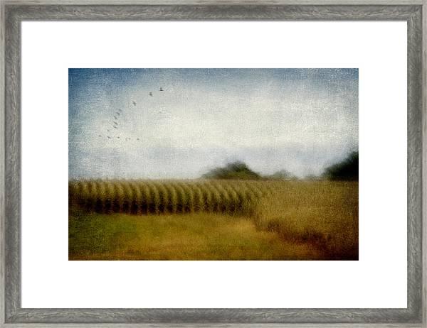 Midwestern Drive-by Corn Fields Framed Print