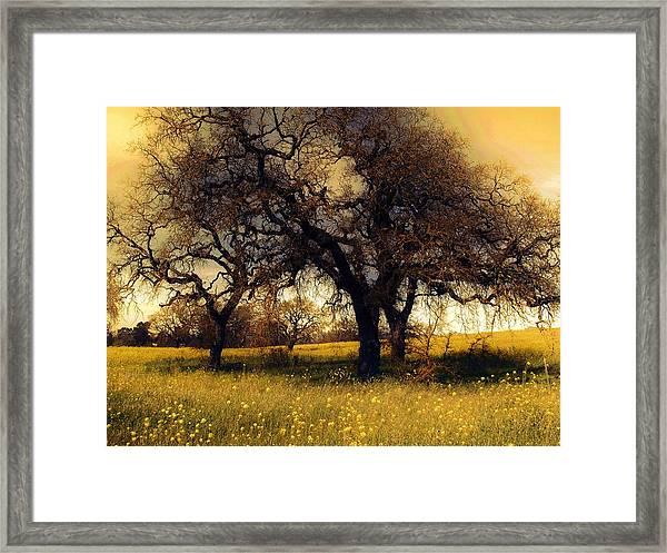 Might Oak Framed Print
