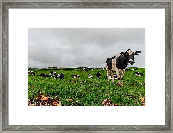 Milk Nature Nose Framed Print