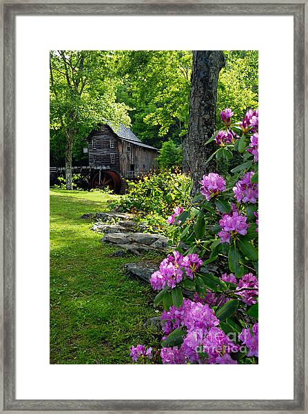 Mill And Rhododendrons Framed Print