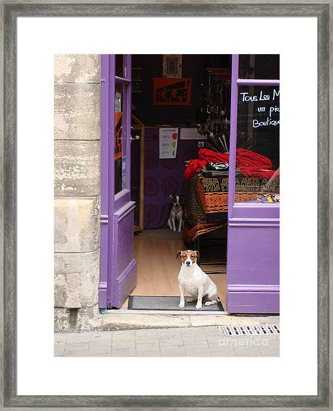 Minding The Shop. Two French Dogs In Boutique Framed Print