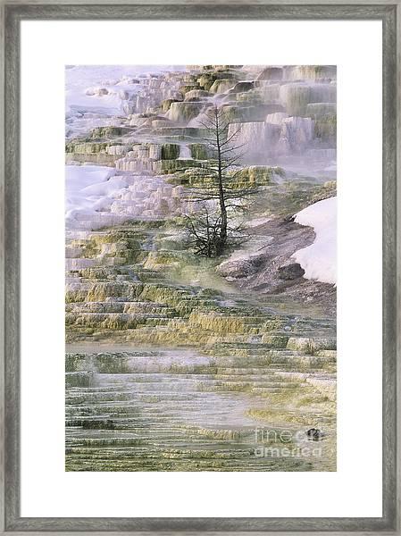 Minerva Springs Terraces Yellowstone National Park Framed Print