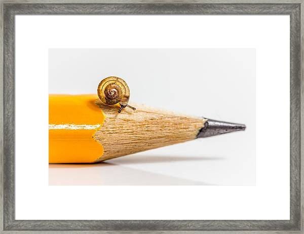 Mini Snail. Framed Print