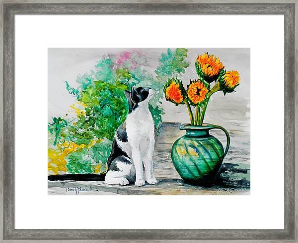 Da129 Miss Kitty Daniel Adams Framed Print
