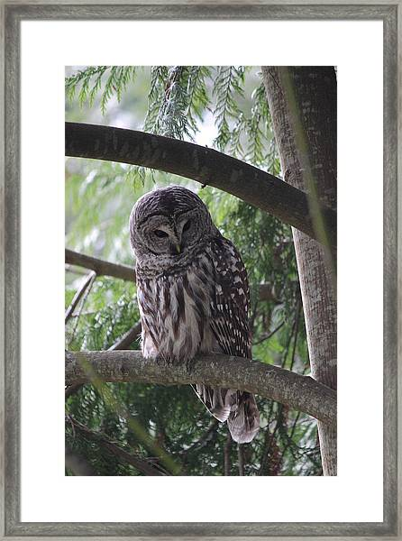 Framed Print featuring the photograph Missing His Friend by Randy Hall