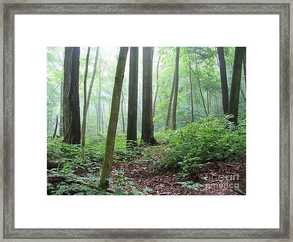 Misty Deep Forest Framed Print