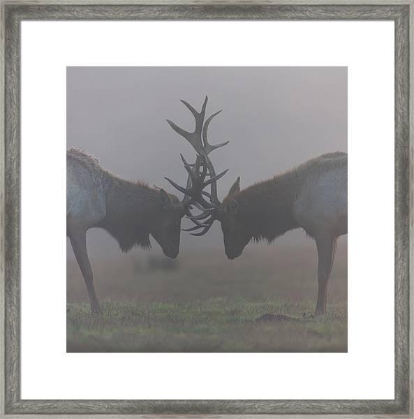 Misty Encounter Framed Print