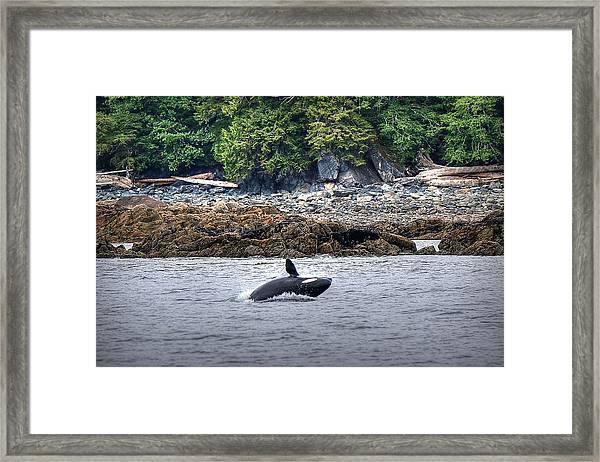 Misty Fjords Orca Framed Print