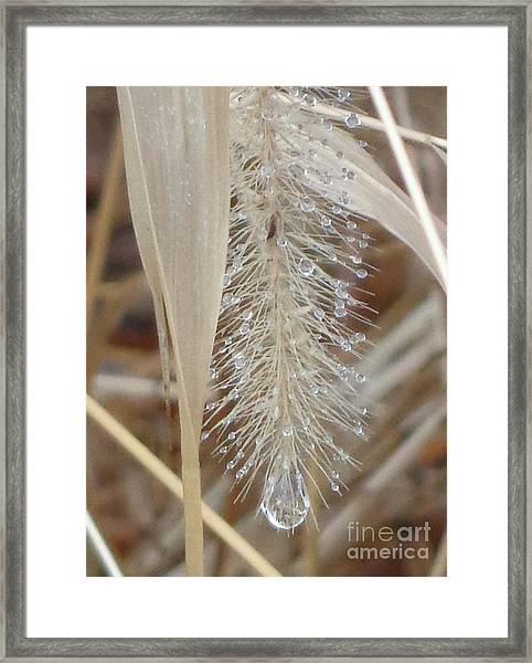 Misty Jewel Framed Print