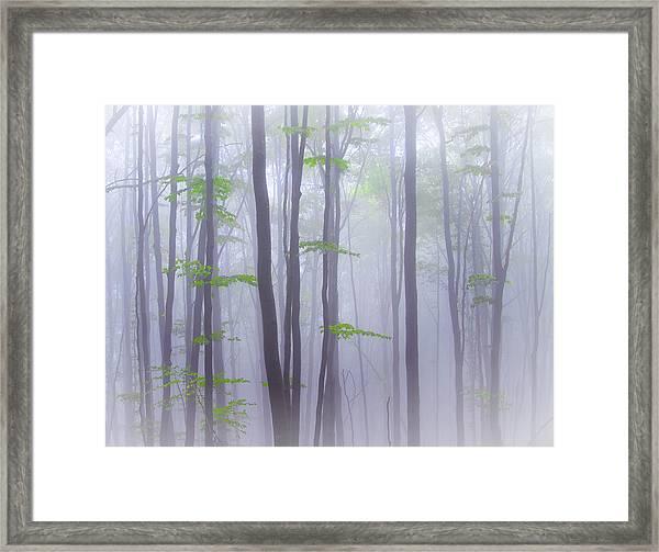 Misty Framed Print by Michel Manzoni