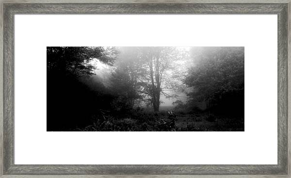 Misty Morning With Tree Silhouettes Framed Print