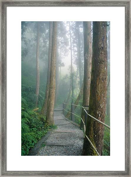 Misty Trail Framed Print
