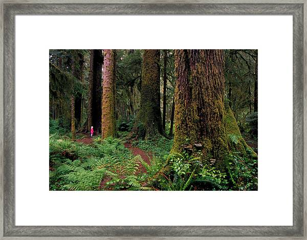 Mixed Coniferous Forest Framed Print