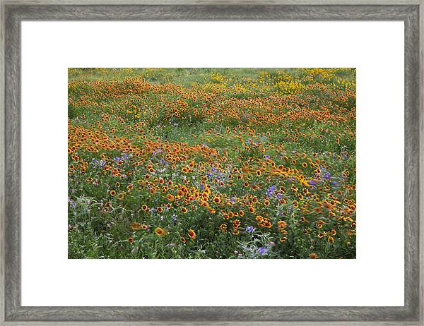 Mixed Wildflowers Blowing Framed Print