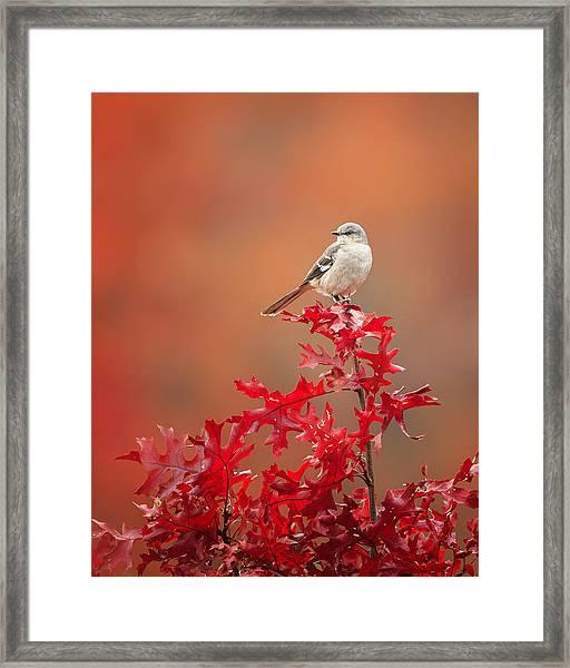 Mockingbird Autumn Framed Print