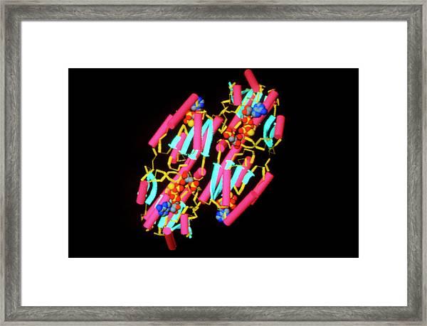 Molecule Of Phospho- Fructokinase Enzyme Framed Print