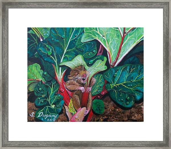 Molly's Umbrella  Framed Print