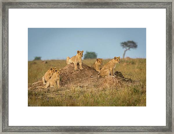 Mom's Coming Back - Dinner Is Almost Here. Framed Print