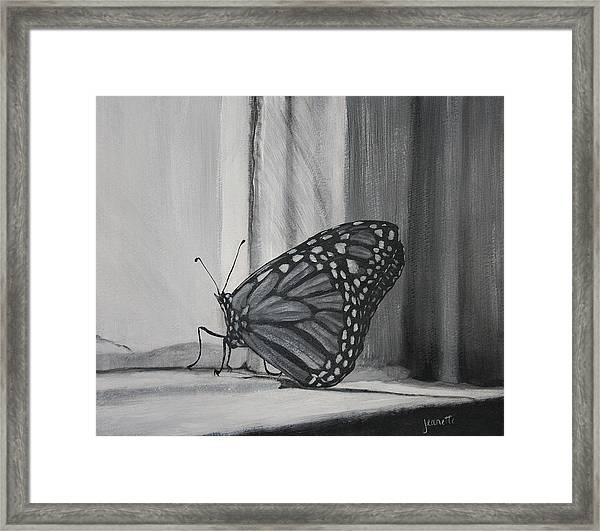 Monarch In The Window Framed Print