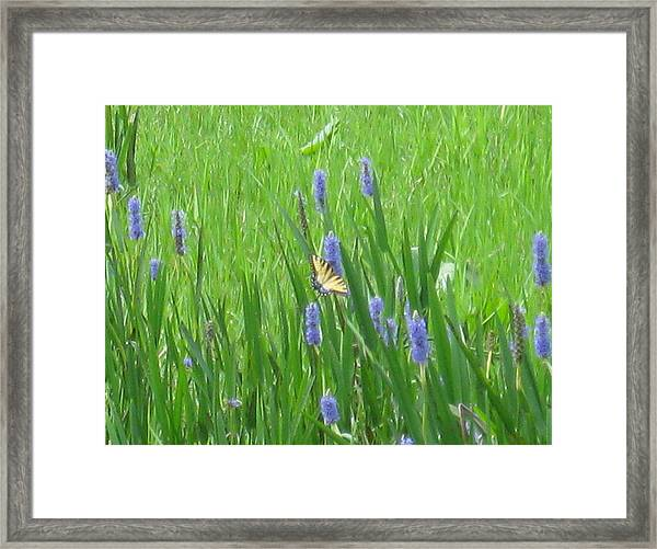 Monarch Of The Lake Framed Print