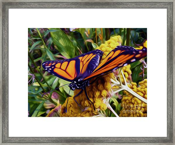 Monarch On Yarrow Framed Print