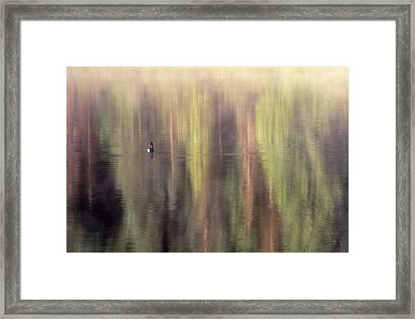 Monet's Duck Framed Print