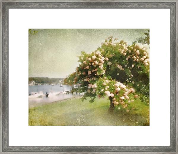 Monet's Tree Framed Print
