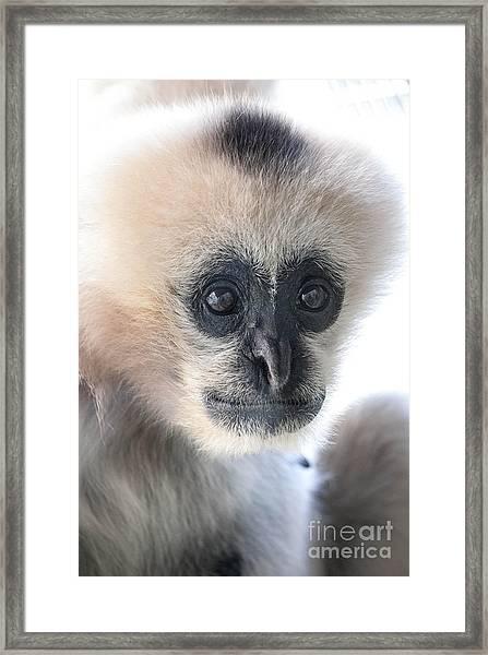 Monkey Face Framed Print