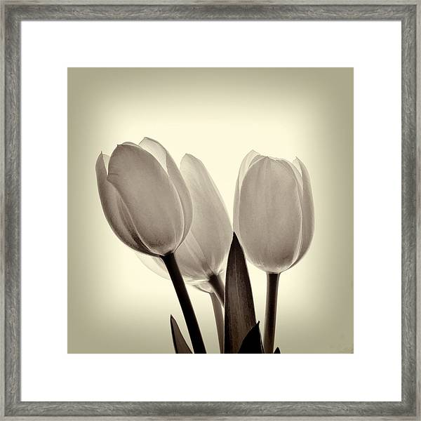 Monochrome Tulips With Vignette Framed Print