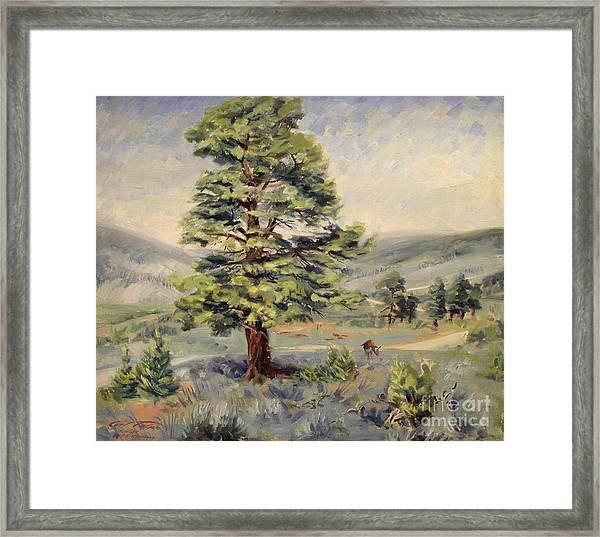 Montana Grazer 1935 Framed Print