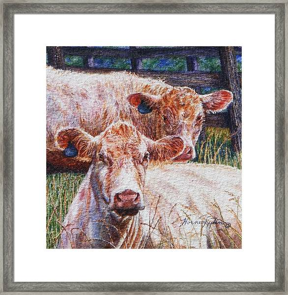 Moo Are You? Framed Print