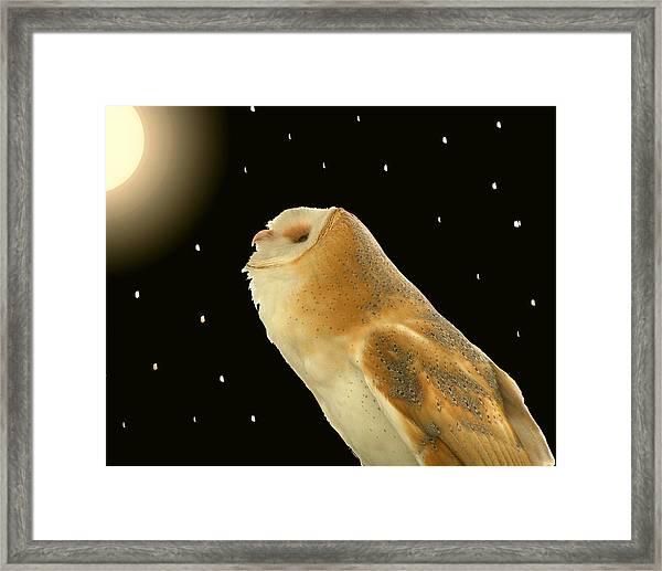Moon Owl Framed Print