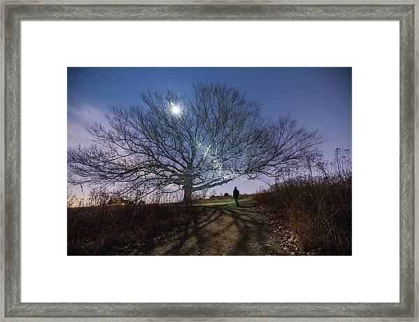 Moon Tree Framed Print