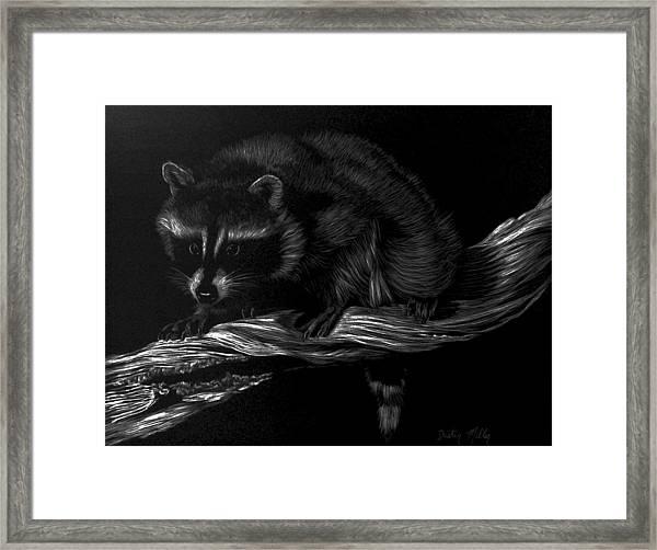 Moonlight Bandit Framed Print