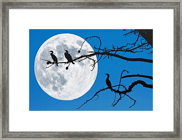 Moonlit Cormorants Framed Print by Donna Pagakis