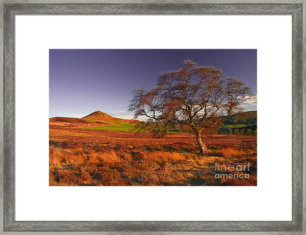 Moorland Tree North Yorkshire Framed Print