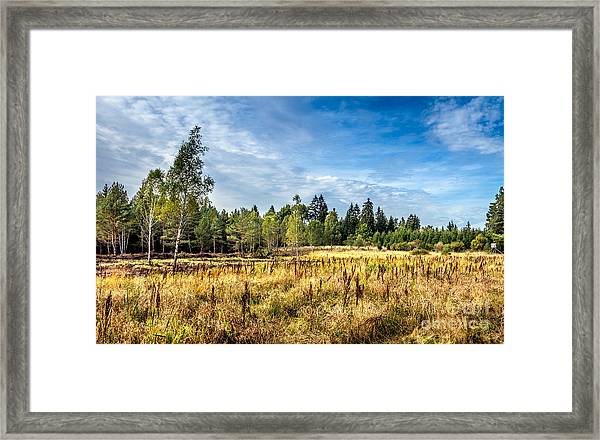 Wetlands In The Black Forest Framed Print
