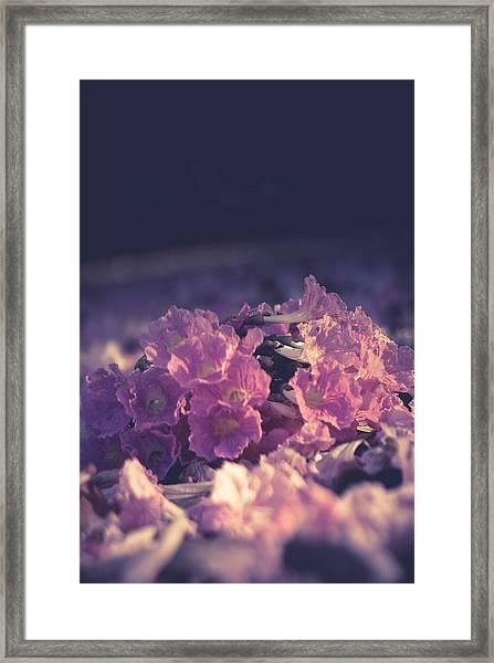 Morning Bloom Framed Print