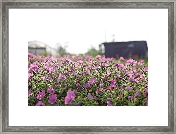 Morning Bugles Framed Print