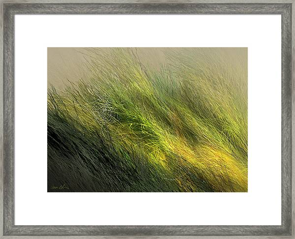 Morning Dew Drops Framed Print