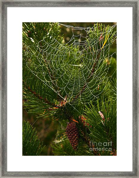 Morning Dew On Cobweb Framed Print