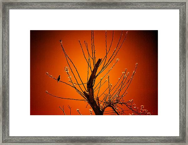 Morning Dove Sunrise Framed Print