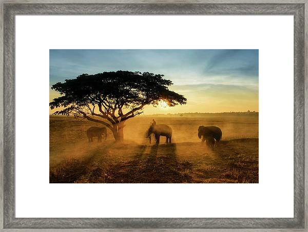 Morning Elephant Home Town Framed Print by Saravut  Whanset