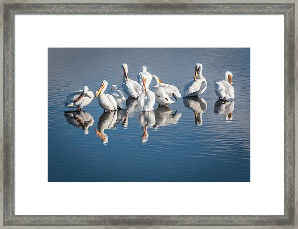 Morning Groom Framed Print