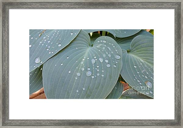 Morning Hoya Framed Print