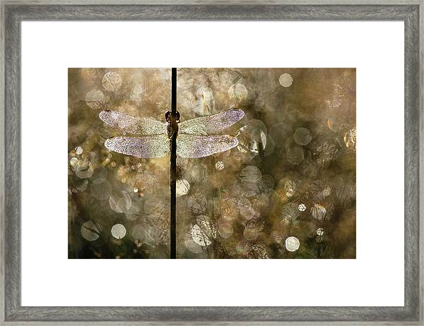 Morning Light Framed Print by Rob Blanken